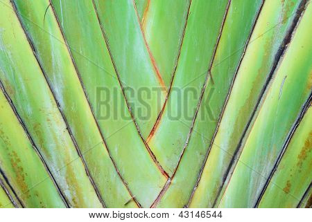 A Type Of Banana Leaves Cascaded Like A Blow Background