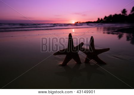 sea star starfish Silhouette on sunrise beach,  shallow dof