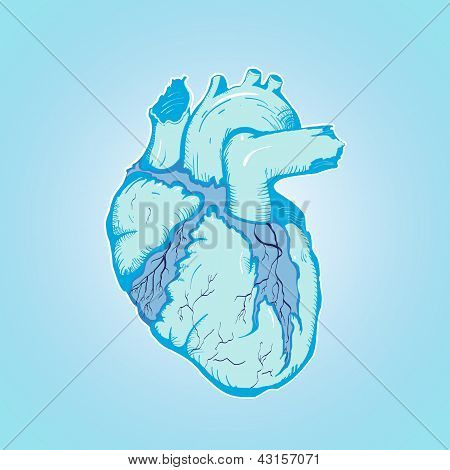 heart of ice human blue with Veins and Ventricles