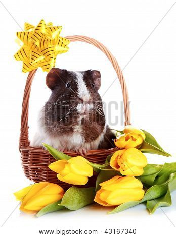 Guinea Pig In A Basket With A Bow And Flowers.