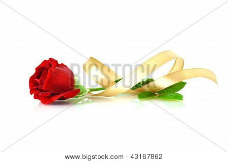 Red rose with gold ribbon over white