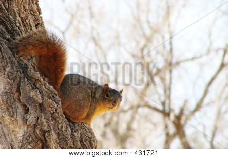 Tree Sitter