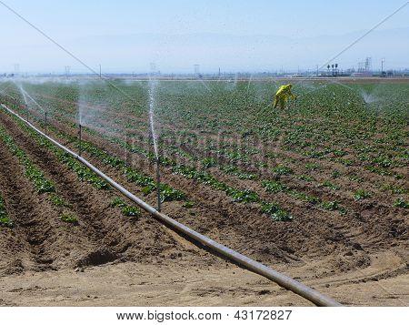 Farm Worker in the Field