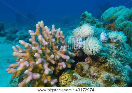 coral reef with hard and soft corals at the bottom of tropical sea