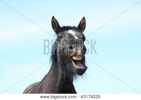 Portrait Of Black Yawning Horse
