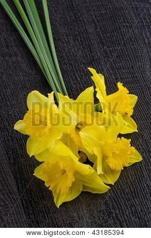 Yellow Jonquil Flowers
