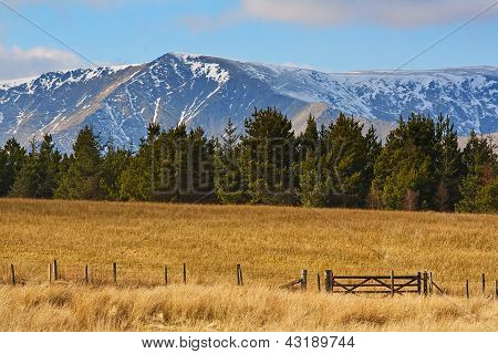 Mountains Pine Trees Fields