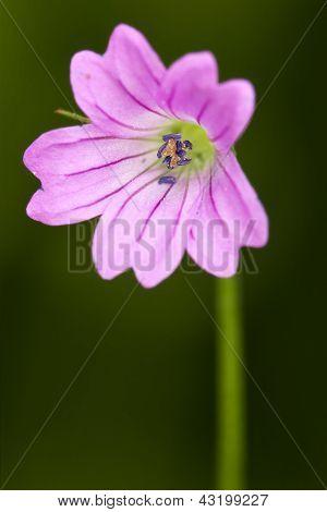 Macro Close Of Violet