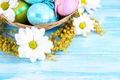 Easter eggs in basket and mimosa flowers, on blue wooden background