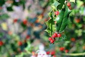 stock photo of aquifolium  - detail of ilex aquifolium red berries in a winter day - JPG