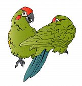 stock photo of stippling  - An illustration of a pair of colorful parrots interacting - JPG