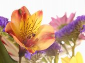 Постер, плакат: Цветы
