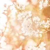 Picture of beautiful apple tree blossom, abstract natural background, grunge orange photo, fine art,