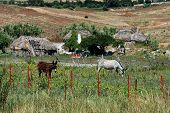 Small farm, Medina Sidonia, Andalusia, Spain.