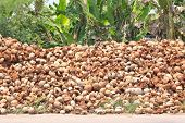 stock photo of discard  - Pile of discarded coconut husk in coconut farm - JPG