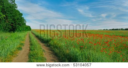 field Mak red dirt road greens grass trees
