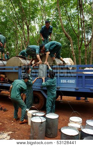 Teamwork at rubber plantation