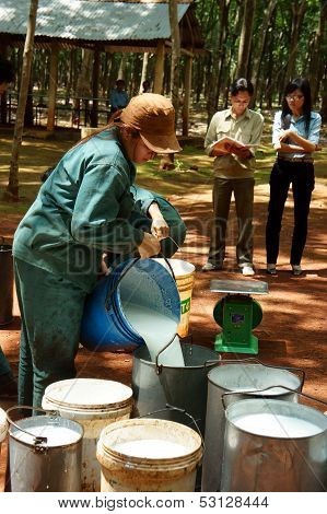 Worker working at rubber plantation
