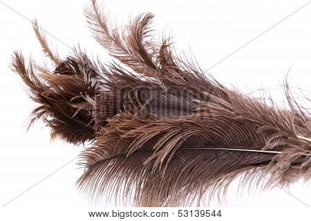 End feather duster