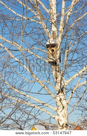 Nesting Box On Birch Against The Blue Sky