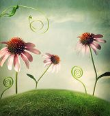 stock photo of hilltop  - Echinacea flowers in a fantasy hilltop landscape - JPG