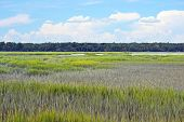 stock photo of marshlands  - A pretty marsh landscape in Hilton Head South Carolina - JPG