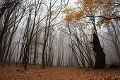 stock photo of fallen  - Autumn forest with fog among trees and a lot of fallen leaves - JPG