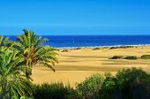 stock photo of canary-islands  - a view of the Natural Reserve of Dunes of Maspalomas - JPG