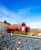 pic of wine-press  - cabernet sauvignon wine grapes and round press in outdoor after harvest - JPG