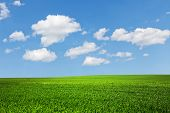 stock photo of pastures  - field  and perfect blue sky - JPG