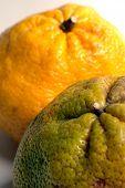 image of tangelo  - tangelo fruit from jamaica - JPG