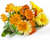 stock photo of stamen  - orange flower bouquet heap of calendula close up macro Isolated on white background - JPG