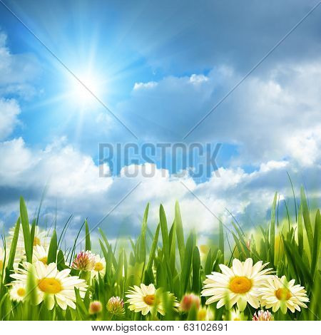 Beauty Meadow With Chamomile Flowers Under Bright Summer Sun