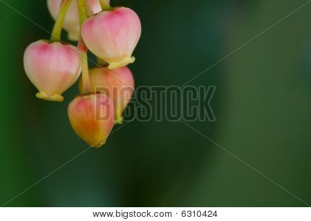 Pastel romantic flower cluster