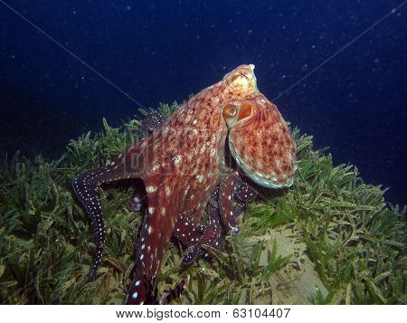 Beautiful octopus