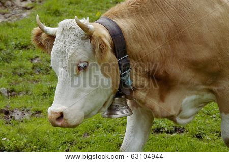 Cow With Cow Bell
