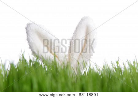 Rabbit Ears Behind Green Grass