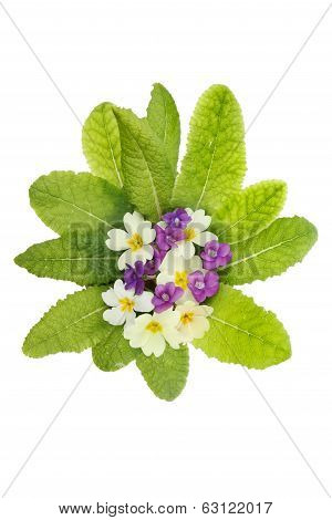 Violets And Primrose