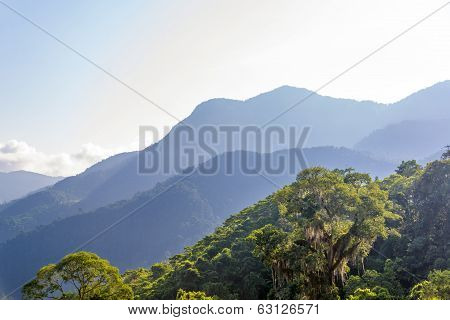 Jungle And Hills