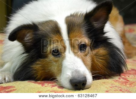 Dog Waiting