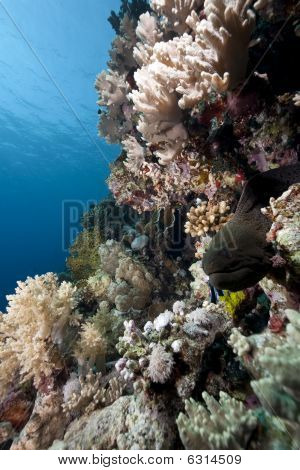 Ocean And Giant Moray