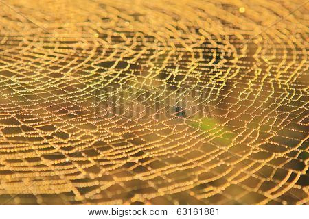 Spider Web of Gold - Cobweb Background from Nature - Details and Textures