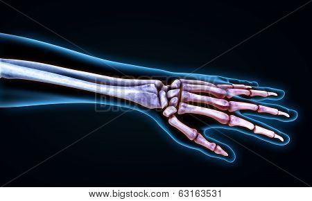 Human Hand Anatomy Illustration