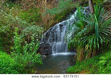 Cascading waterfall in rainforest, Hawaii