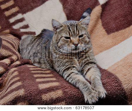 Tame Wild Cat