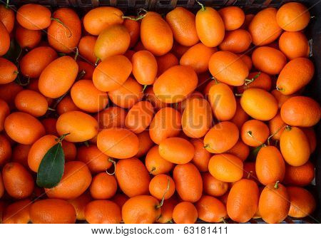 Kumkquat (fortunella Margarita)