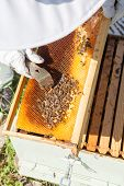 image of beehives  - Beekeeper looking after bees and preparing for honey by maintaining the beehive - JPG