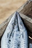foto of barracuda  - Close view at the barracudas on the market - JPG