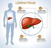 Liver. Modern medical infographics. Internal organs in a human body. Anatomy of people