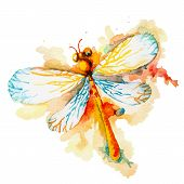 stock photo of dragonflies  - Vector greeting background with beautiful watercolor flying orange dragonfly - JPG